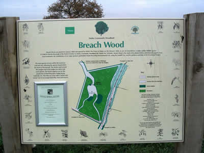 Breach Wood